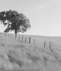 200428-Morgan-Hill-Tree-002124-SEQU-120x4Edit6.jpg